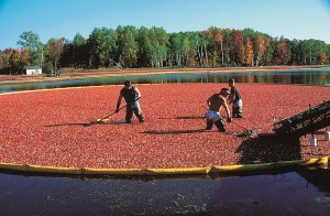About US Cranberries