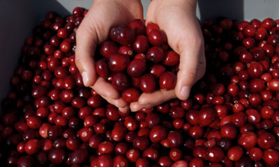 1. US Cranberries_Media and Events_the Buzz