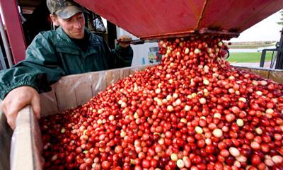 购买美国蔓越莓
