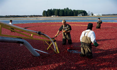 4. US Cranberries_Media and Events_Press Release