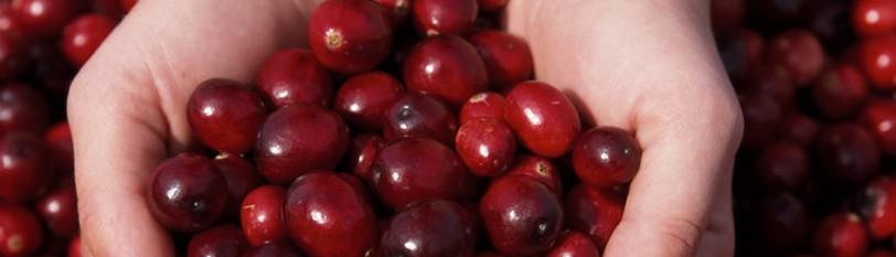 关于美国蔓越莓
