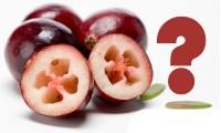 美国蔓越莓常见问题