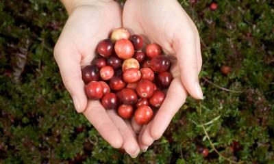 美国蔓越莓时尚美味 健康伙伴