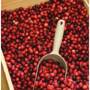 Cranberry Products Reach Smaller Chinese Cities as Popularity Grows